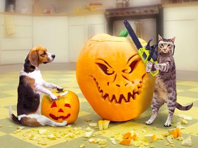 ¡¡¡¡¡¡Festival de Hallowen!!!!!!